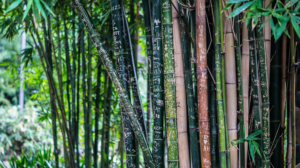 Bamboo - sustainable materials