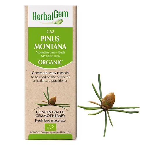 G62 | Pinus Montana (50ml)