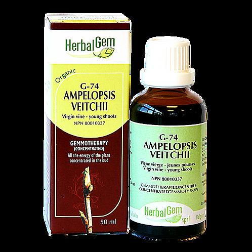 G74 | Ampelopsis veitchii (50ml)