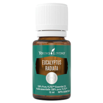 Eucalyptus Radiata Essential Oil - 15ml