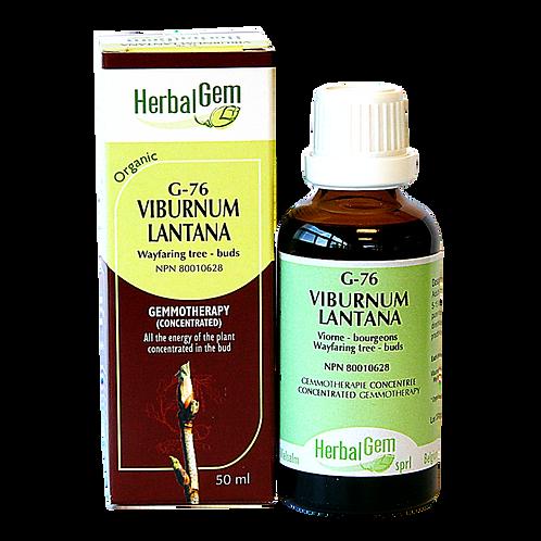 G76 | Viburnum lantana (50ml)