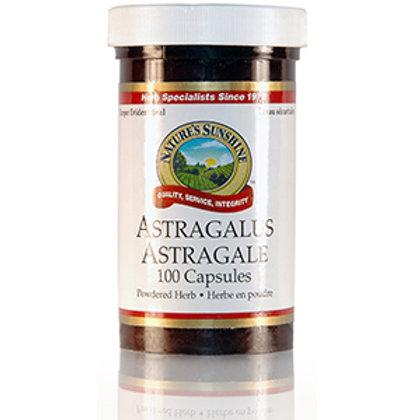 Astragalus (100 Capsules)