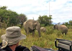 Game Drive Elephant herd