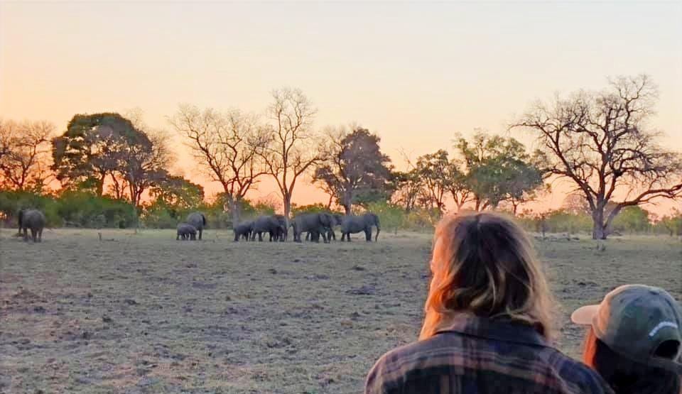 Elephants on Walking Trails