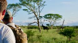 Elephant_trails_Bayala