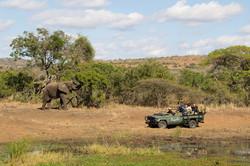 Bayala Vehicle Safari