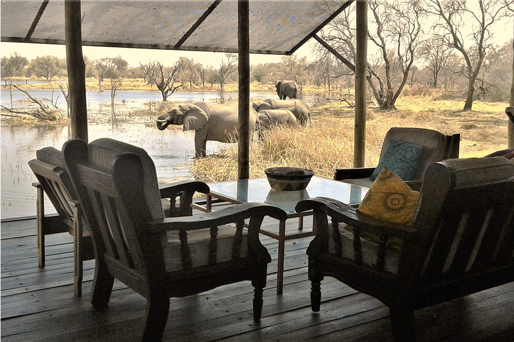 Elephants from deck