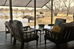 Elephants from deck