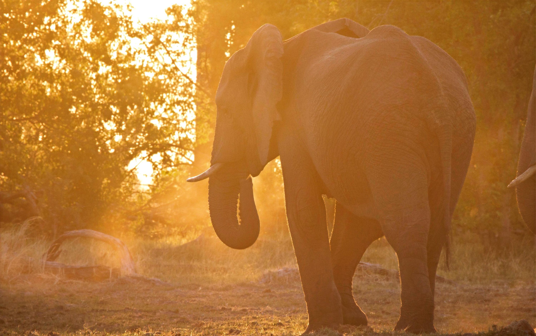 Elephant in dust