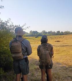 Trails Guide Mentorship