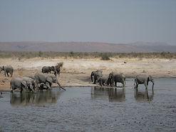 Tau Elephant.jpg