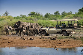 Jacis Safari game drive elis.jpg