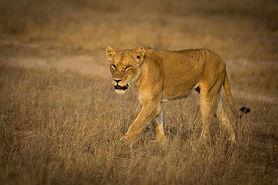 Makanyi-Lodge-Wildlife-17.jpg
