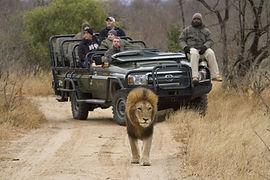 Thornybush lion.jpg