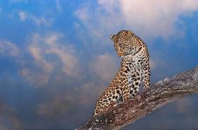 arathusa_wildlife_16.jpg
