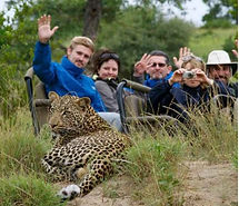 simbavati river leopard.JPG