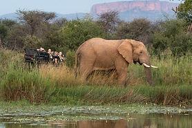 Marataba South Africa_Safari_4_ Game Dri