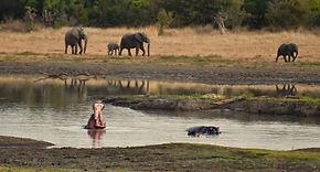 hippo yawning.jpg