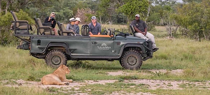 savanna lion 3.jpeg