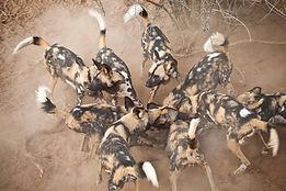 Luxury Self-Catering Safari Camp in the Timbavati Reserve