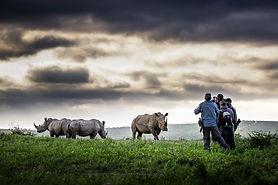 Rhino Ridge 3.jpg