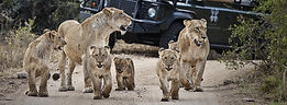 Luxury Game Lodge in the Sabi Sand Reserve