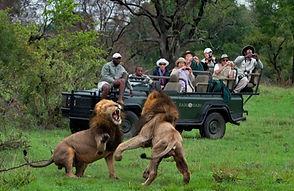 Sabi sabi Lions 2.JPG