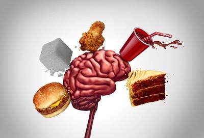 Первое в мире исследование связывает ожирение со снижением пластичности мозга