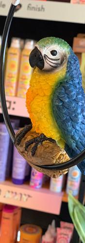 Dusty the salon parrot