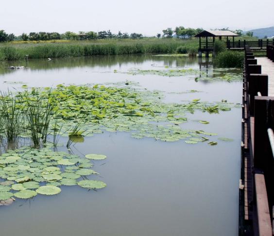 Recuperação de rios, tratamento de água de rio, wetlands para rios, tratamento passivo