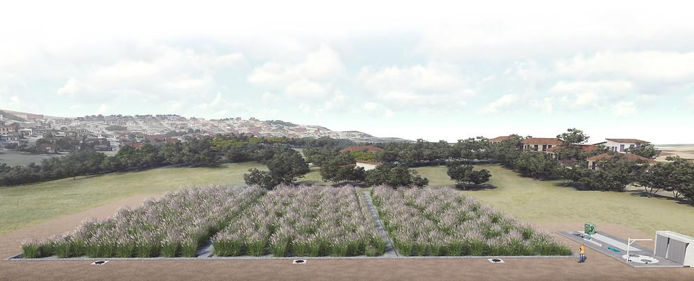 wetlands construídos, paisagismo, sustentabilidade, sistema wetlands