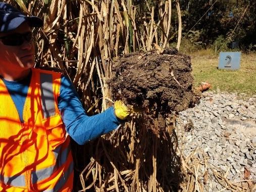Monitoramento de UGL Wetlands demonstra o potencial agronômico do lodo de esgoto