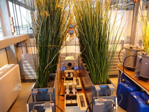 Wetlands construídos: qual a maneira mais adequada para nominar esta tecnologia?