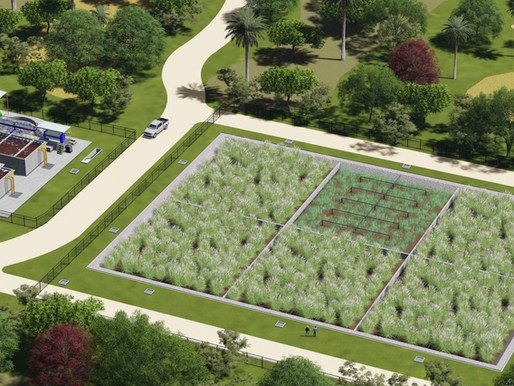 Wetlands Construídos: uma solução para o tratamento de lodos de esgoto