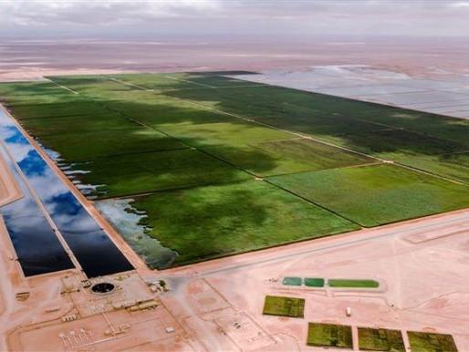 Maiores cases de sistemas wetlands construídos ao redor do mundo