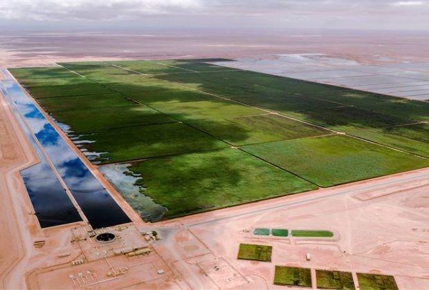 Tratamento águas complexas, águas com óleo, maior wetlands do mundo