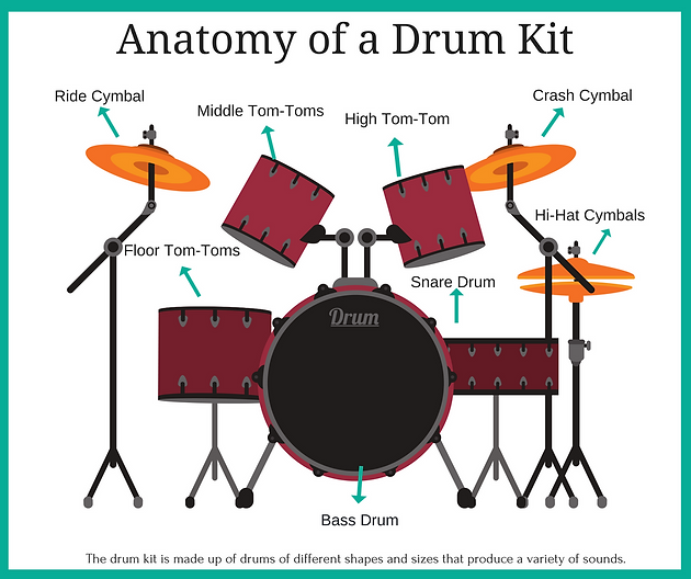 Luxury Drum Set Anatomy Vignette - Anatomy And Physiology Biology ...