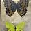 Thumbnail: Quad Butterflies