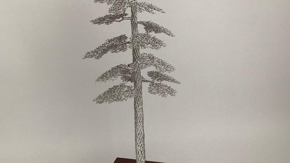 Scots Pine on a Sapele Base
