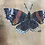 Thumbnail: Red Admiral Butterfly