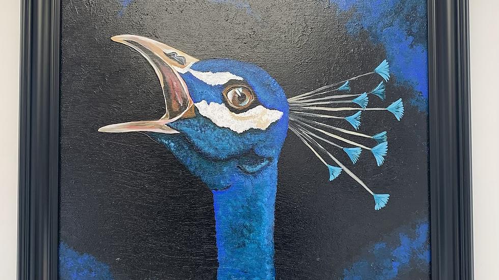 Hawk eye peacock