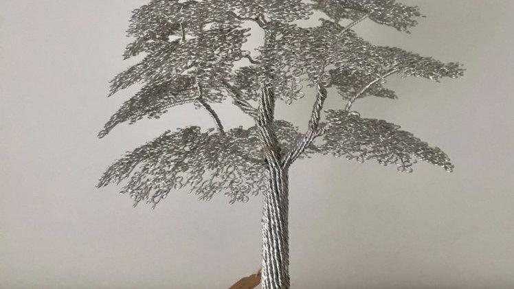 Oak tree on English walnut