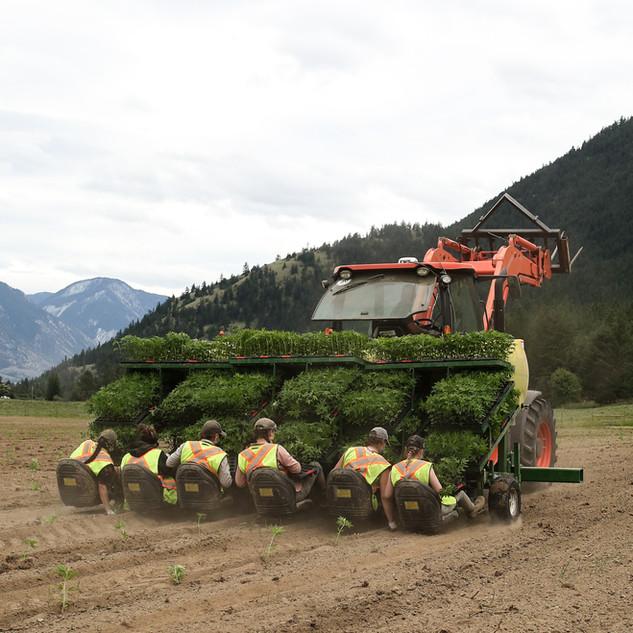 farm-5.JPG