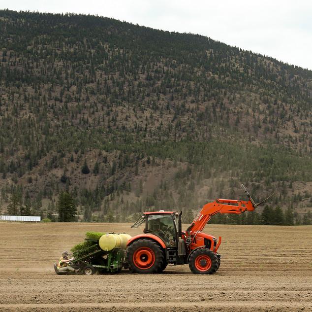 farm-3.JPG