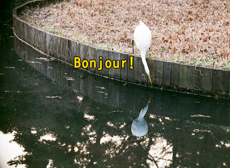 """""""Bonjour"""" : The most difficult word in French"""