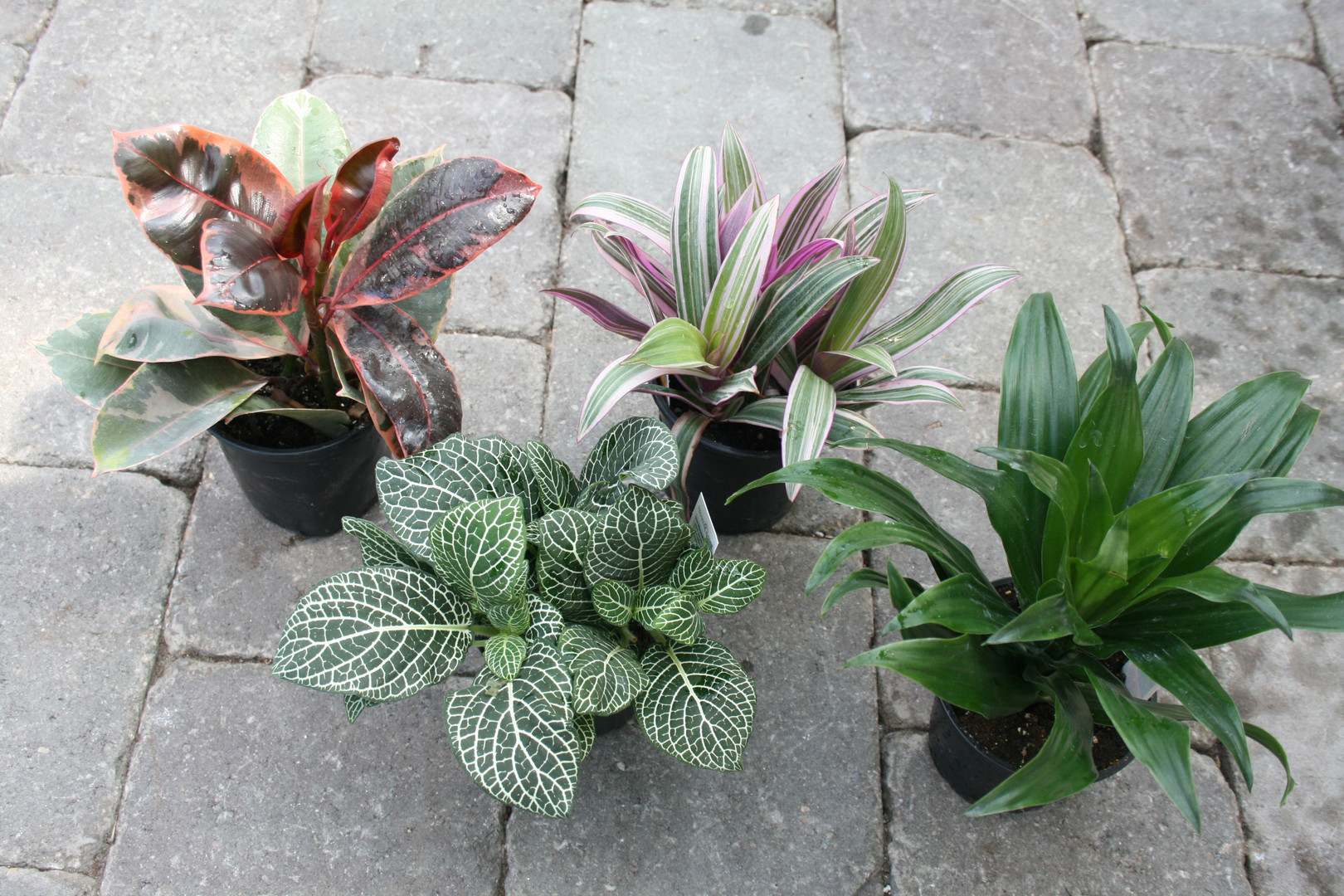 "4"" Assorted Foliage"