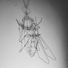 Wasp_edited.jpg
