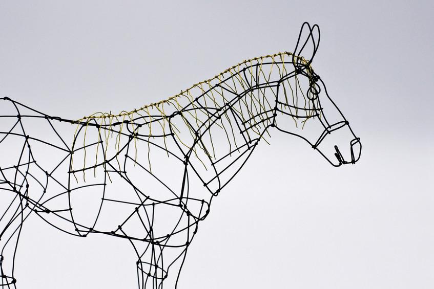毛の長い馬