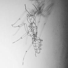 Ant_edited.jpg