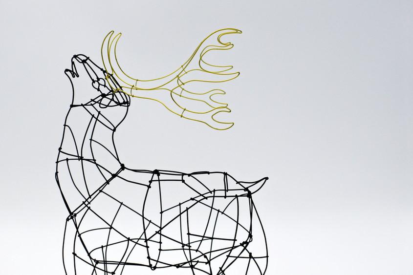 星に願う鹿